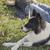 pastor · cão · naturalismo · prado · romeno · em · pé - foto stock © hitdelight