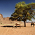 kamelen · rum · woestijn · Jordanië · hemel · boom - stockfoto © hitdelight