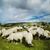 羊 · 雲 · 曇った · 青空 · 空 - ストックフォト © hitdelight