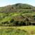 panorama · rebanho · vacas · holandês · preto · e · branco · grama - foto stock © hlehnerer