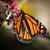 borboleta · vale · Havaí · EUA · verão · laranja - foto stock © hlehnerer