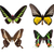 exotic colorful butterflies stock photo © hochwander