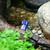 лягушка · трава · лес · тело · саду · фон - Сток-фото © hochwander