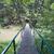 ponte · montagna · foresta · legno · vicino · acqua - foto d'archivio © hochwander