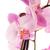 edény · rózsaszín · orchidea · ág · friss · virágok - stock fotó © homydesign