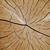 álamo · cortar · rachaduras · abstrato · madeira · floresta - foto stock © homydesign