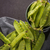 Green Sugar Snap Peas stock photo © homydesign