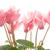 kolorowy · wiele · ogród · narzędzia · odizolowany · biały - zdjęcia stock © homydesign