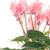 красивой · розовый · цветок · белый · природы · лет - Сток-фото © homydesign