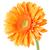 turuncu · papatya · çiçek · yalıtılmış · beyaz · kırmızı - stok fotoğraf © homydesign