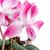 красивой · розовый · цветок · белый · домой · красоту - Сток-фото © homydesign