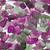 ametiszt · izolált · fekete · drágakő · gyémánt · rózsaszín - stock fotó © homydesign