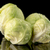 deux · vert · tournesol · usine · isolé · blanche - photo stock © homydesign