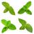 свежие · мята · белый · лист · зеленый - Сток-фото © homydesign