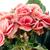 rosa · prímula · flores · branco · folha - foto stock © homydesign