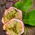 Passion fruits stock photo © homydesign
