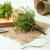 impianti · primo · piano · fresche · verde · piccolo · foglie - foto d'archivio © homydesign