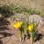 roxo · amarelo · açafrão · jardim · flor · folha - foto stock © hraska