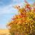 europese · tak · ondiep · veld · natuur · paar - stockfoto © hraska
