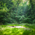 место · пикника · идеальный · семьи - Сток-фото © hraska