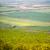 小麦 · 農業の · 風景 · 業界 · 作業 - ストックフォト © hraska