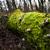 pozostawia · jesienią · ziemi · starych · drzewo · lasu - zdjęcia stock © hraska