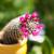 kaktusz · virágzó · sárga · virágok · mediterrán · virág · tavasz - stock fotó © hraska