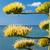 pormenor · agave · planta · natureza · folha - foto stock © hraska