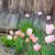 díszítő · zsálya · lila · virág · zöld · tavasz · kert - stock fotó © hraska