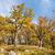autumn oak forest stock photo © hraska