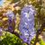 bella · fiori · fresche · viola · isolato · bianco - foto d'archivio © hraska