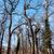 ツリー · クラウン · 表示 · 木材 · 緑 - ストックフォト © hraska