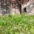 fal · pitypangok · öreg · grunge · utca · virágzó - stock fotó © hraska