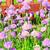 çiçeklenme · zaman · yaratıcı · pişirme · otlar - stok fotoğraf © hraska