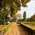 caminho · bordo · árvores · Oregon · natureza - foto stock © hraska