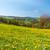 florescimento · campo · montanhas · primavera · paisagem - foto stock © hraska