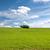 chêne · vert · prairie · ciel · lumière · nuages - photo stock © hraska
