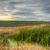 болото · области · пейзаж · облака · природы - Сток-фото © hraska