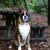 sevimli · beyaz · köpek · yavrusu · köpek · yaprakları · sonbahar - stok fotoğraf © hsfelix