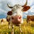curioso · vaca · grande · anjo · céu · natureza - foto stock © icefront