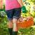 женщину · картофель · саду · полный · корзины - Сток-фото © icefront
