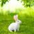 ウサギ · バニー · 動物 · ペット - ストックフォト © icefront