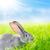 кролик · Bunny · животного · ПЭТ - Сток-фото © icefront