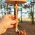 hand holding parasol mushroom stock photo © icefront