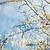 virágok · bokeh · napos · tavasz · erdő · gyönyörű - stock fotó © ifeelstock