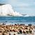 white chalk cliffs stock photo © ifeelstock