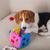 beagle playing on sofa stock photo © igabriela
