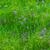 azul · flores · prado · branco - foto stock © igabriela