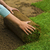 świeże · trawy · dywan · brud · trawnik - zdjęcia stock © iko