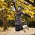 jovem · atraente · feliz · mulher · saltando · alegria - foto stock © iko